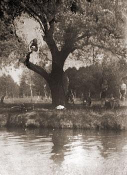 Ярослав Бублик стрибає з верби у Верещицю